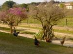 As filmagens rolaram na Fazenda Santa Maria (Tanquinho/Campinas -SP).