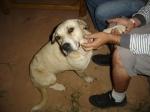 E essa é a Laika, outro pet que veio nos visitar!